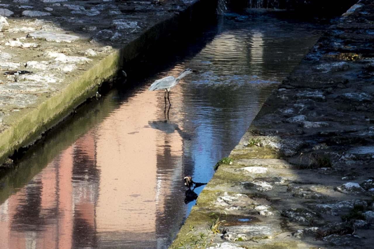 Quell airone nell acqua nera del morla for Cabine nere del torrente