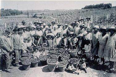 Secondo l'istituto statistico brasiliano tra il 1884 e il 1939 entrarono nel Paese oltre 4 milioni di emigranti